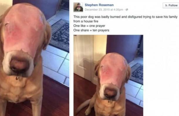 Broma de internet tiene a millones orando por un perro con un jamón en la cara
