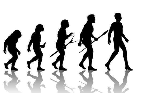 Las increíbles evoluciones del próximo ser humano