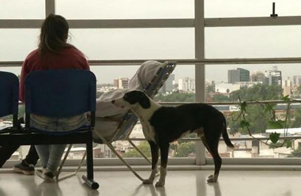 Pirata: El fiel perro que espera todos los días a su amo fallecido al igual que Hachiko