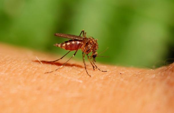 Como ahuyentar al zancudo que transmite el Zika con repelentes naturales.