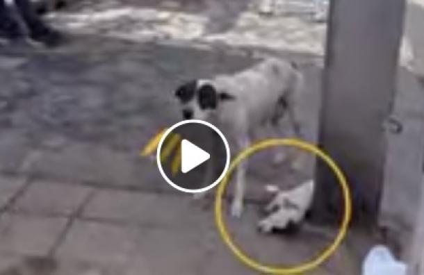 Perro pide ayuda desesperadamente tras ver a su cachorro herido