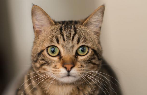 'Castigan' a un gato de un refugio porque dejaba salir a los demás felinos