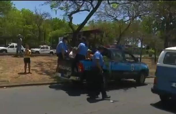 Policía detiene a comerciantes por vender eucalipto
