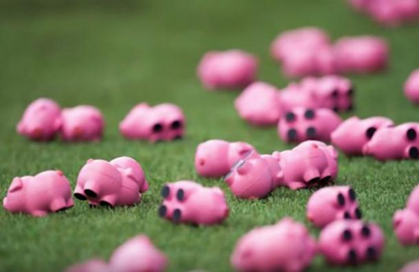 La lluvia de cerdos que obligó a suspender un partido en Inglaterra
