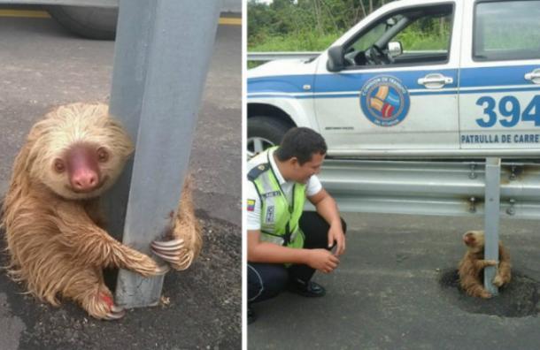 La policía rescató a un aterrorizado perezoso y es lo más tierno que verás hoy