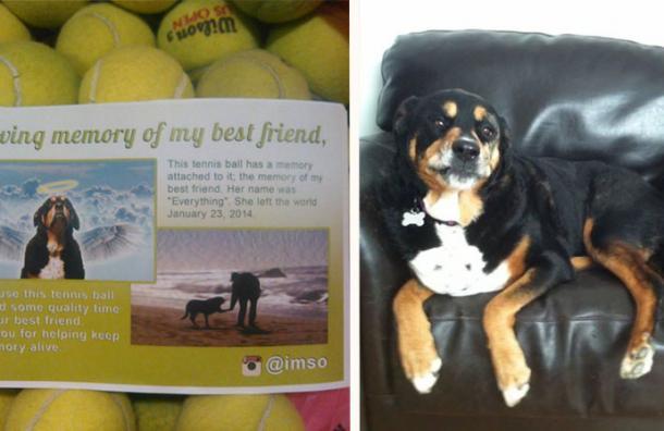 Decidió regalar pelotas de tenis como homenaje a su perrita y no imaginó la respuesta que encontraría